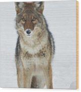 Coyote Looking At Me Wood Print