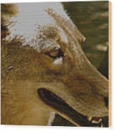 Coyote Profile Wood Print