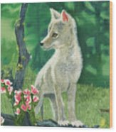 Coyote Pup Wood Print