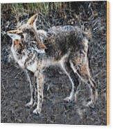 Coyote Waits Wood Print