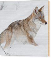 Coyote Winter Wood Print