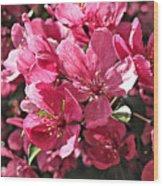 Crab Apple Blossoms 04302015-1 Wood Print