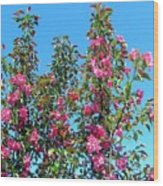 Crab Apple Blossoms Wood Print