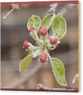 Crab Apple Buds Wood Print