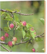 Crab Apple Fruit Wood Print
