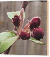 Crab-apple Tree Flower Buds Wood Print