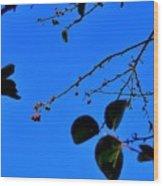 Crab Apples Blue Sky 6510 Wood Print