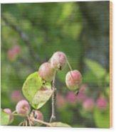Crab Apples Wood Print