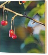 Crab Apples Branches P 6543 Wood Print