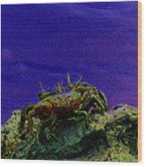 Crab Cakez 5 Wood Print