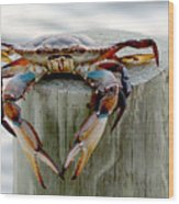Crab Hanging Out Wood Print