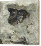 Crab Hiding In A Rock On The Seashore Wood Print