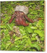 Crab On The Move Wood Print