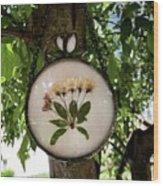 Crabapple Blossoms Wood Print