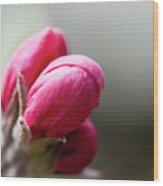 Crabapple Buds Wood Print