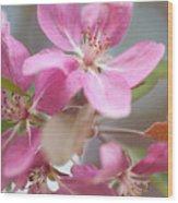 Crabapple Tree  Pink Flowers Wood Print
