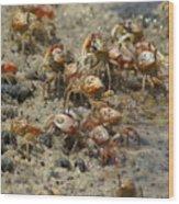 Crabs R Us Wood Print