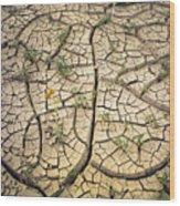 317805-cracked Mud Patterns  Wood Print
