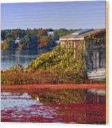 Cranberry Bog Farm II Wood Print