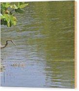 Crane Observing Balancing Turtle Wood Print