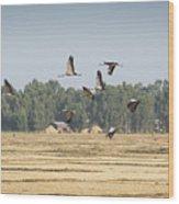 Cranes Over Ethiopia Wood Print