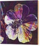 Cranesbill Flower Close Bee Insect  Wood Print