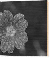 Cranesbill Geranium In Black And White Wood Print