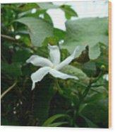 Crape Jasmine 2 Wood Print