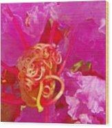Crape Myrtle Bud Wood Print