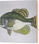 Crappie Fish Of Usa  Wood Print