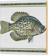 Crappie Print Wood Print by JQ Licensing