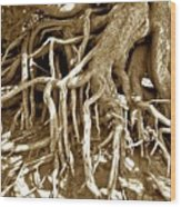 Crater Lake Tree Wood Print