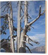 Crater Lake Tree Wood Print