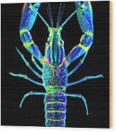 Crawfish In The Dark - Blublue Wood Print