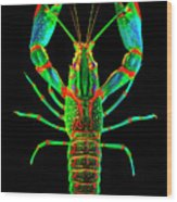 Crawfish In The Dark - Orivibsat Wood Print