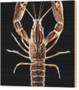 Crawfish In The Dark - Sepia Wood Print