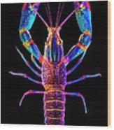 Crawfish Inthe Dark Allsat Wood Print