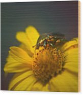 Crawling June Beetle Wood Print