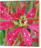 Crazy Dewy Red Flower Wood Print