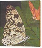 Cream And Orange Butterflies Wood Print