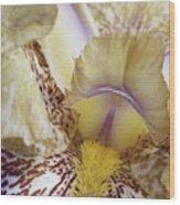 Cream And Purple Iris Wood Print