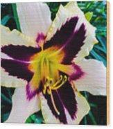Cream And Purple Lily Macro Wood Print