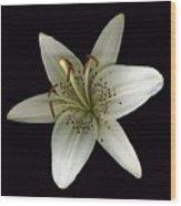 Cream Lily Wood Print