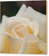 Cream Rose Kisses Wood Print by Lisa Knechtel