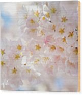 Creamy Blossoms Wood Print