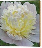 Creamy Petals - Double Peony Wood Print