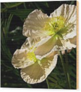 Creamy Poppies Wood Print