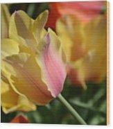 Creamy Yellow Tulip Wood Print
