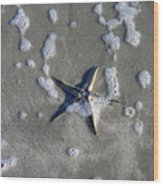 Creatures Of The Gulf - A Fallen Star Wood Print