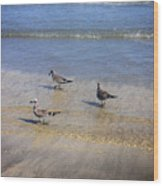 Creatures Of The Gulf - Morning Walk Wood Print
